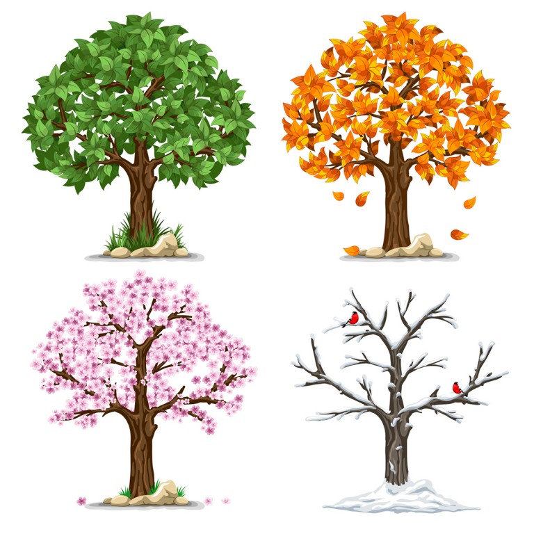 Trees-Four-Season
